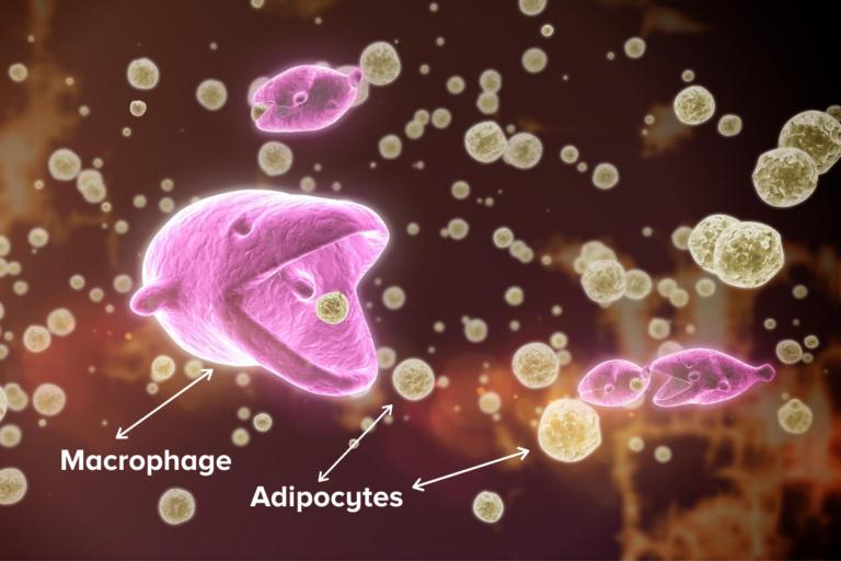 Makrophage En